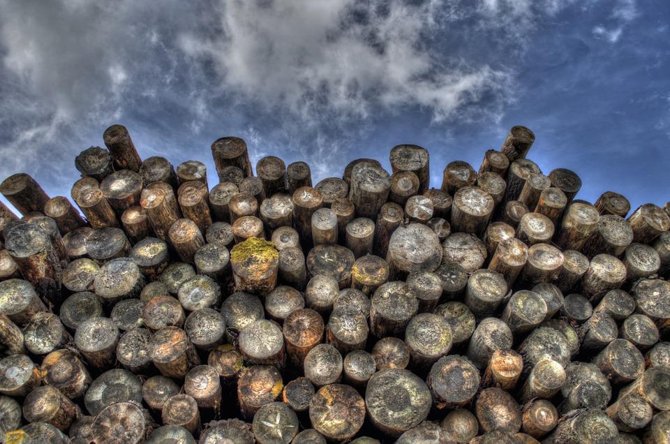 boomstammen op een stapel