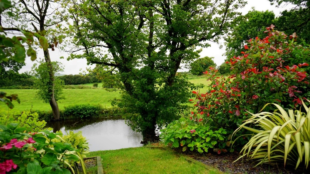 tuin in zomer